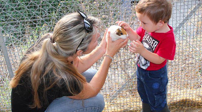 Petite ferme : les « Samedis en famille » plébiscités