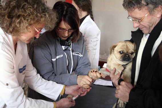 Dépistage de la Leishmaniose sur un chien