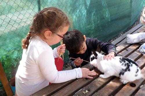Petite Ferme : les enfants nourrissent le lapin