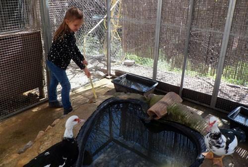 Petite Ferme : mare aux canards