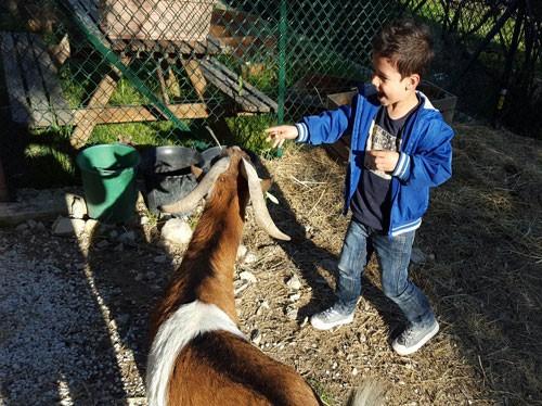 Petite Ferme : enfant qui nourrit une chèvre