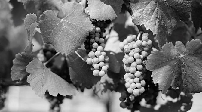 Souvenirs : le vin des abadiens